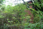 overgrown_lot
